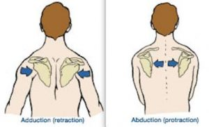 Retraction anatomy definition